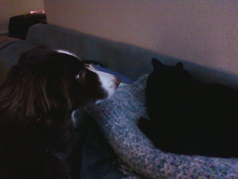 brady-kitty
