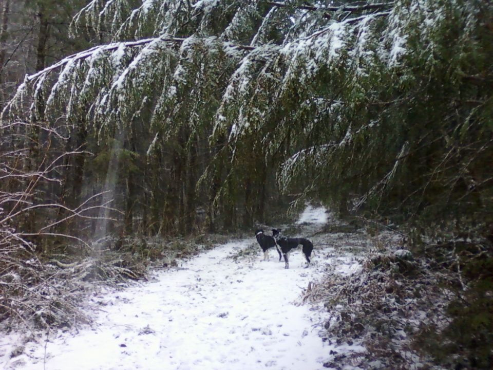 dogs-in-snow-2-snoqualmie-feb2017