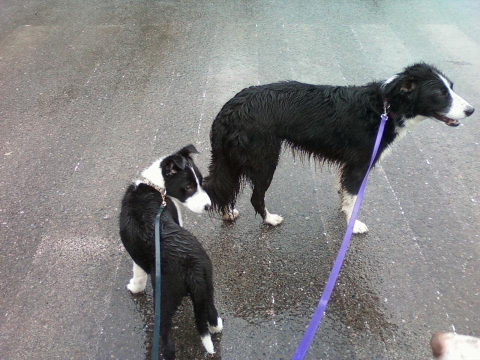 Rhys & Camm leash walking