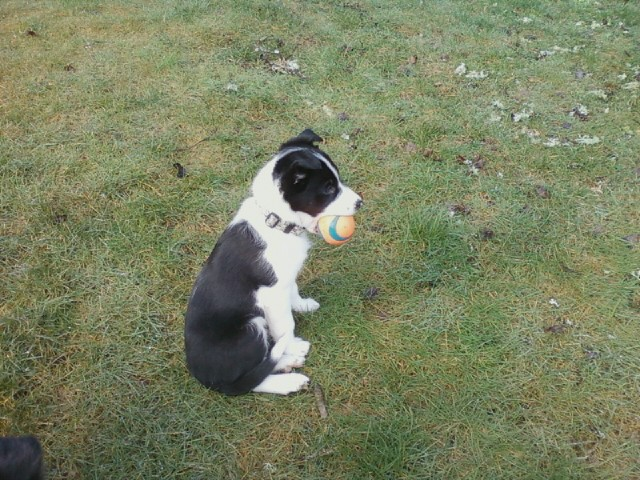 Rhys with Ball in late Feb.